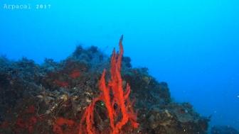 Coralligeno5
